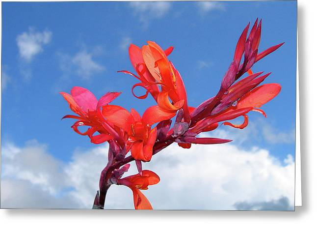 Flowers Against The Sky Greeting Cards - Reach for the Sky Greeting Card by Randy Rosenberger