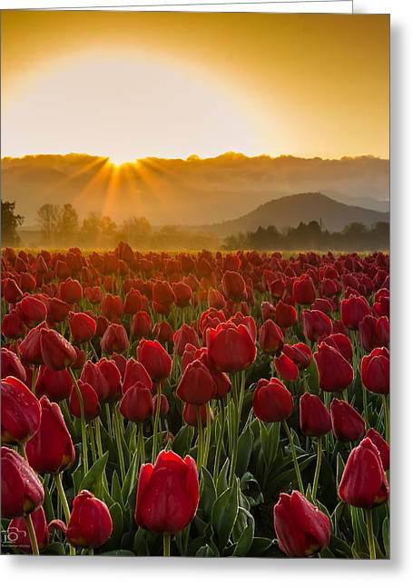 Christopher Fridley Greeting Cards - Reach for the Sun Greeting Card by Christopher Fridley