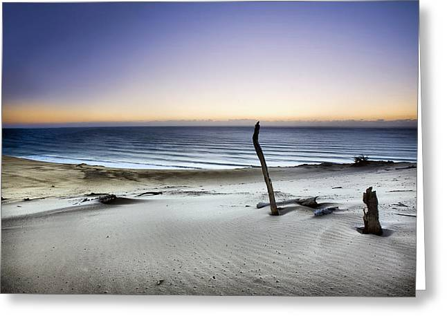 Driftwood Beach Greeting Cards - Reach For The Sun Greeting Card by Mel Brackstone