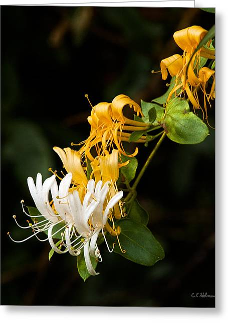 Reaching Greeting Card by Christopher Holmes