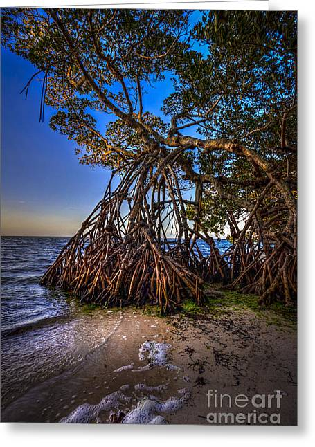 St Petersburg Florida Greeting Cards - Reaching For Earth And Sky Greeting Card by Marvin Spates