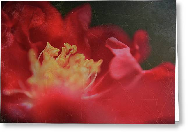 Stamen Digital Greeting Cards - Reaching For Joy Greeting Card by Laurie Search