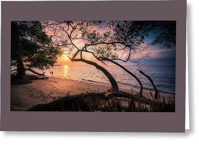 Reaching For The Sun Greeting Card by Marvin Spates