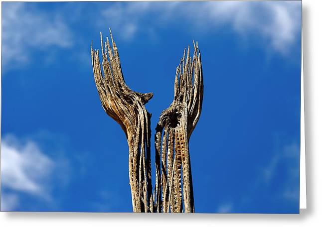 Reach Greeting Cards - Reaching Hands Greeting Card by Murray Bloom