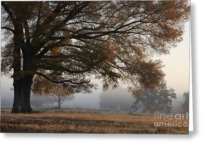 Images Of Trees Greeting Cards - Reaching out Greeting Card by Amanda Barcon