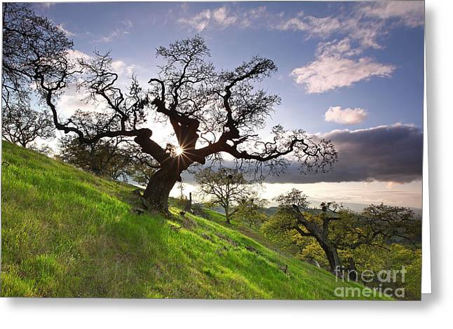 Concord Greeting Cards - Reaching shadow through Dragon Oak Mt Diablo State Park California 2014 Greeting Card by Benjamin Race - Arc of Light Photography
