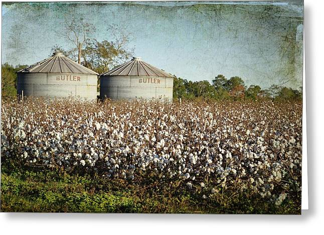 Georgia Cotton Fields Greeting Cards - Ready For Harvest Greeting Card by Jan Amiss Photography