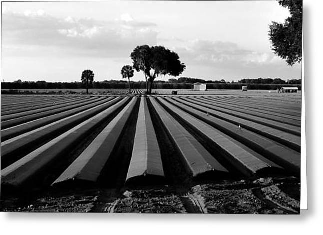 Ready For Planting  Greeting Card by David Lee Thompson