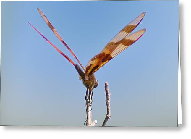 Dragonflies Greeting Cards - Ready for Take Off Greeting Card by Bill Cannon