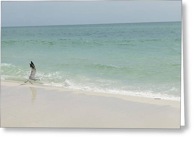 Beach Photography Greeting Cards - Ready for Takeoff  Greeting Card by Henry Happeny