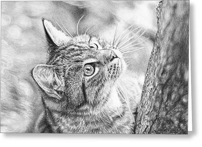 Kitten Prints Greeting Cards - Ready Set Climb Greeting Card by Frances Vincent