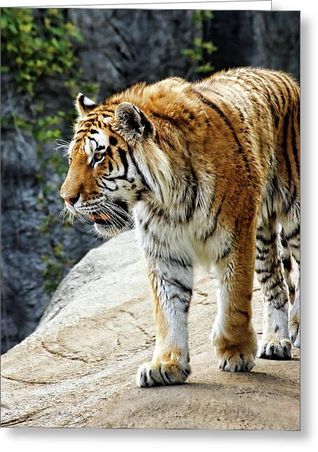 Ready To Pounce Greeting Card by Gordon Dean II