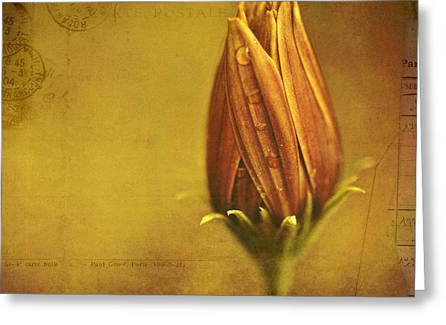 Wet Petals Greeting Cards - Recollection Greeting Card by Bonnie Bruno