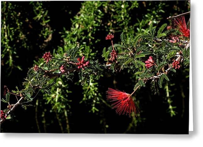 Red And Black Greeting Card by Glenn DiPaola