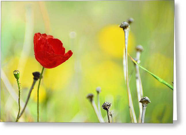 Red and yellow Greeting Card by Guido Montanes Castillo