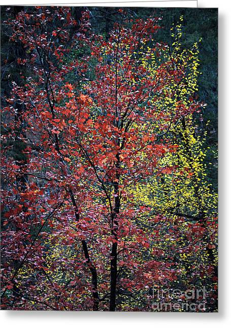West Fork Greeting Cards - Red and Yellow Leaves Abstract Vertical Number 1 Greeting Card by Heather Kirk