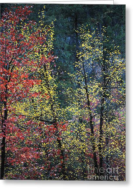 West Fork Greeting Cards - Red and Yellow Leaves Abstract Vertical Number 2 Greeting Card by Heather Kirk