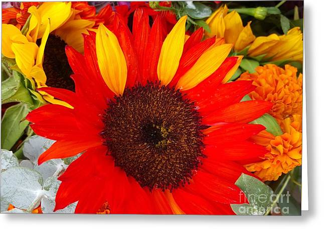 Bloosom Greeting Cards - Red And Yellow Sunflowers In Love  Greeting Card by Jasna Gopic