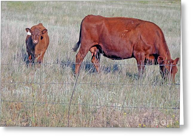 Greeting Cards - Red Angus Cow And Calf Greeting Card by Kay Novy