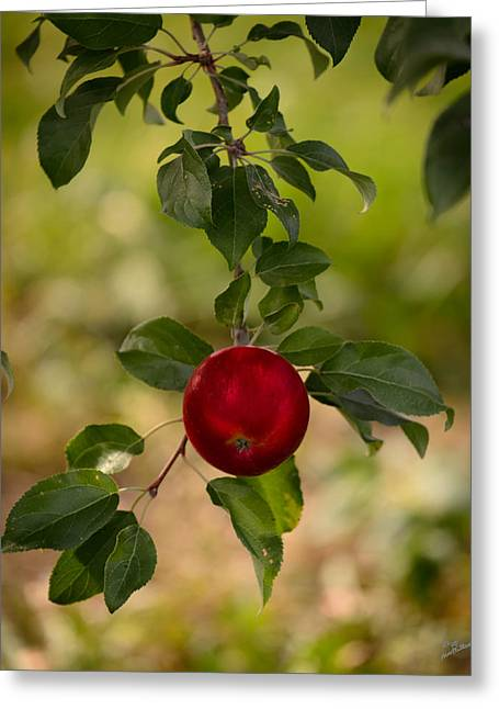 Red Apple Ready For Picking Greeting Card by Donna Lee