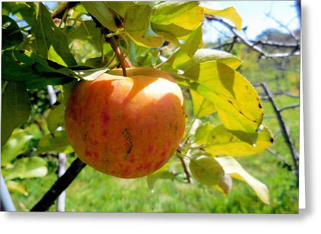 Day Greeting Cards - Red apples on tree 2 Greeting Card by Lanjee Chee
