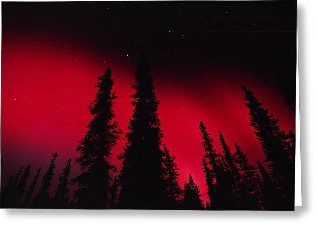 Forest Habitat Greeting Cards - Red Aurora Borealis Over Boreal Forest Greeting Card by Michael Quinton