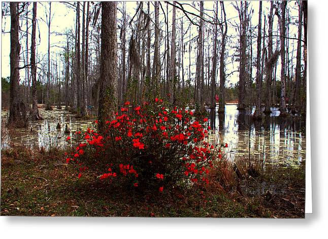 The Swamp Greeting Cards - Red Azaleas in the Swamp Greeting Card by Susanne Van Hulst