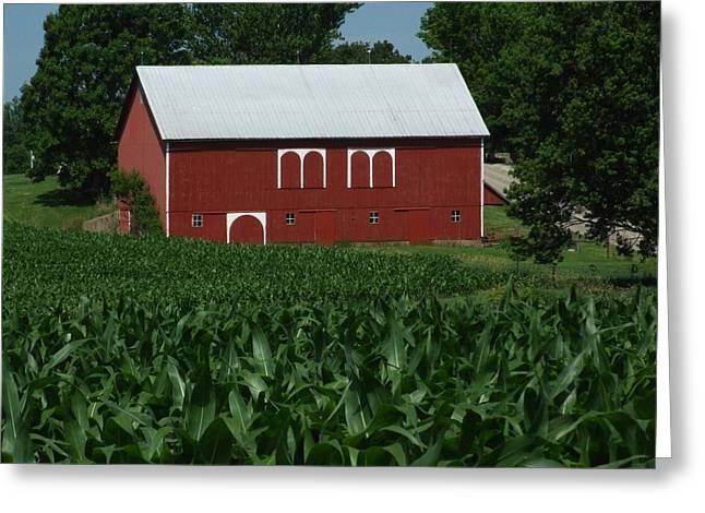 Indiana Farms Greeting Cards - Red Barn Corn Greeting Card by Michael L Kimble