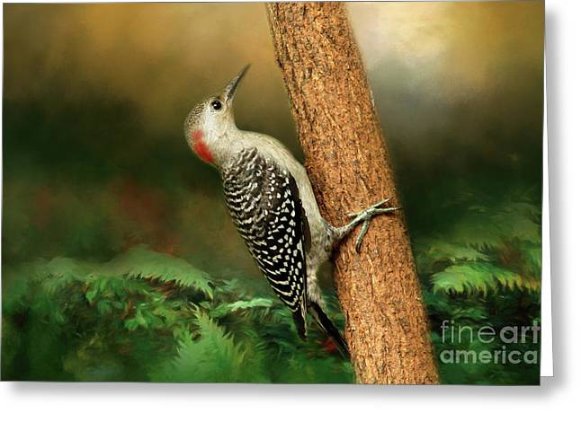 Red Bellied In Search Of Food Greeting Card by Darren Fisher