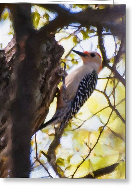 Digital.oil Greeting Cards - Red-Bellied Woodpecker Greeting Card by Chris Flees