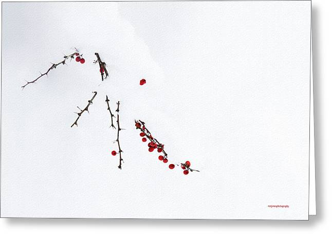 Ron Jones Greeting Cards - Red Berries Greeting Card by Ron Jones