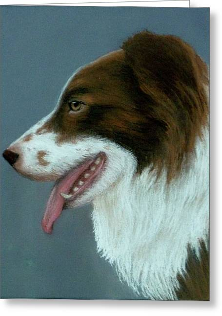 Collie Pastels Greeting Cards - Red Border Collie Greeting Card by Pat Neely
