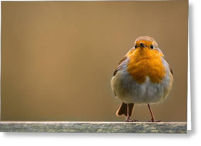 Red Breast Robin - Chorley, Lancashire, Uk. Greeting Card by Daniel Kay