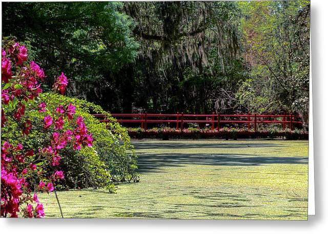 Alga Greeting Cards - Red Bridge Pond Greeting Card by Drew Castelhano