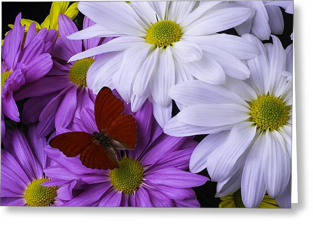 Gerbera Daisies Greeting Cards - Red Butterfly On Assorted Mums Greeting Card by Garry Gay