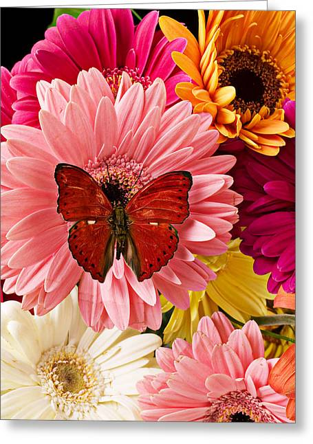 Indoors Greeting Cards - Red butterfly on bunch of flowers Greeting Card by Garry Gay