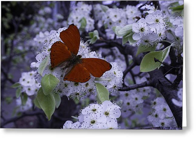 Plum Blossoms Greeting Cards - Red Butterfly On Cherry Blossoms Greeting Card by Garry Gay