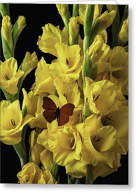 Gladiolus Greeting Cards - Red Butterfly On Yellow Glads Greeting Card by Garry Gay