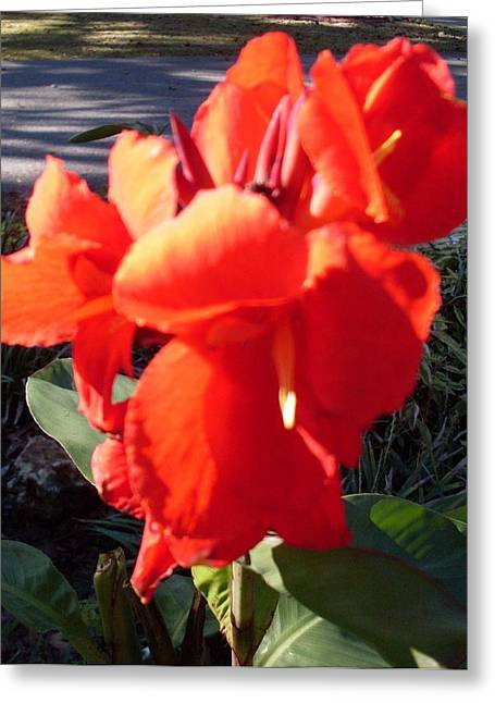 Red Canna Lily Greeting Card by Warren Thompson