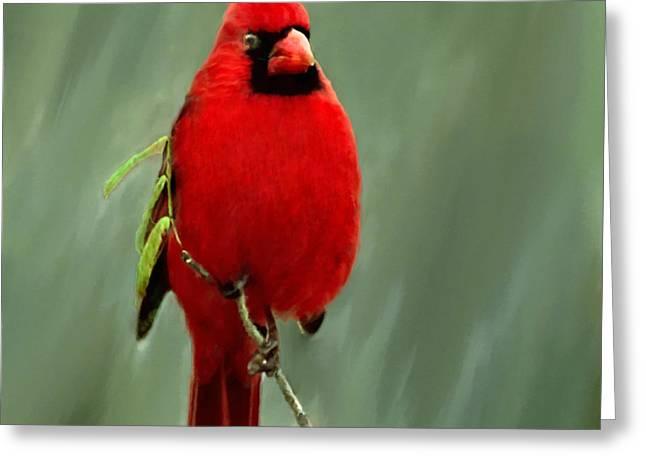 Christmas Greeting Greeting Cards - Red Cardinal Painting Greeting Card by  Bob Johnston