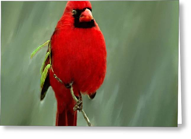 Biological Mixed Media Greeting Cards - Red Cardinal Painting Greeting Card by  Bob Johnston