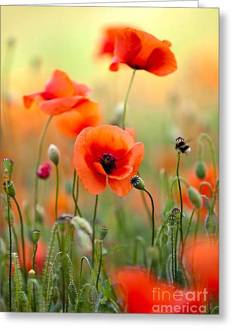 Red Corn Poppy Flowers 06 Greeting Card by Nailia Schwarz