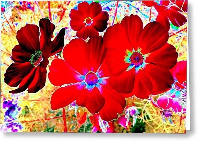 Red Cosmos Greeting Card by Will Borden