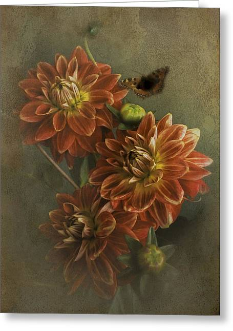 Photographs With Red. Greeting Cards - Red Dahlias Greeting Card by Hugo Bussen