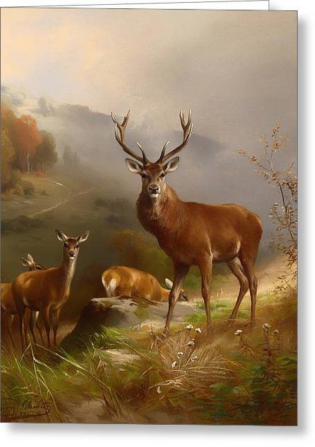 Nature Greeting Cards - Red Deer Greeting Card by Anton Schmitz