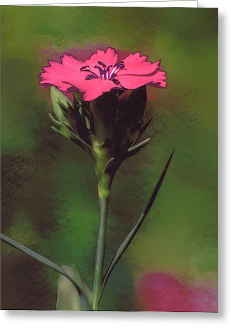 Halinar Greeting Cards - Red Dianthus Greeting Card by Joe Halinar