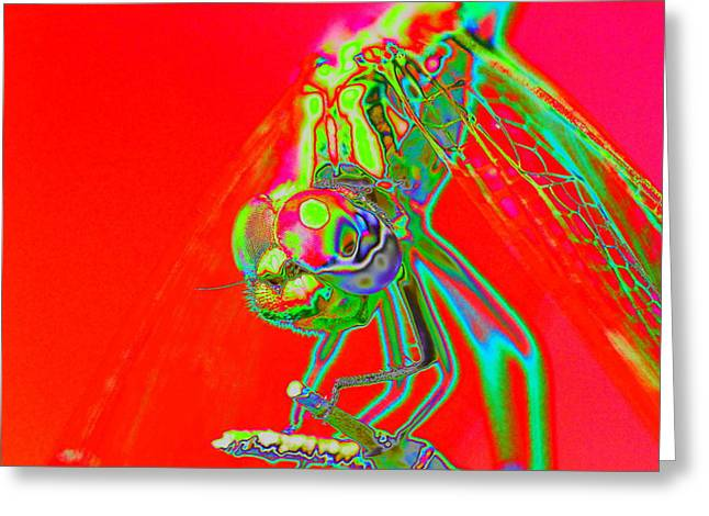 Red Dragon Greeting Card by Richard Patmore