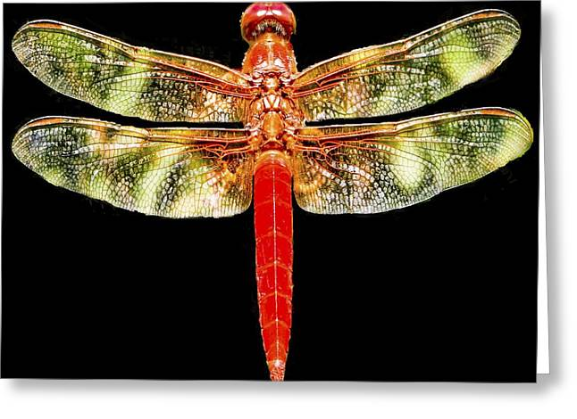 Red And Green Photographs Greeting Cards - Red Dragonfly Greeting Card by Tony Grider