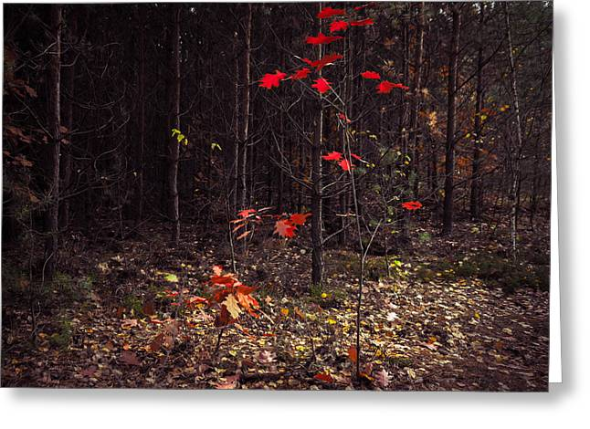 Woodland Scenes Greeting Cards - Red drops Greeting Card by Dmytro Korol
