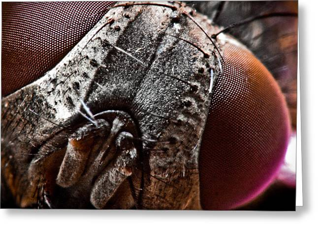 Macro Finalized Photographs Greeting Cards - Red Eye Fly Greeting Card by Ryan Kelly
